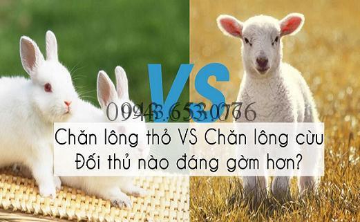 Nên mua chăn lông cừu hay lông thỏ